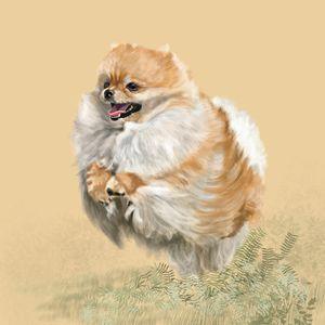 Pomeranian at Play - Dogone Art