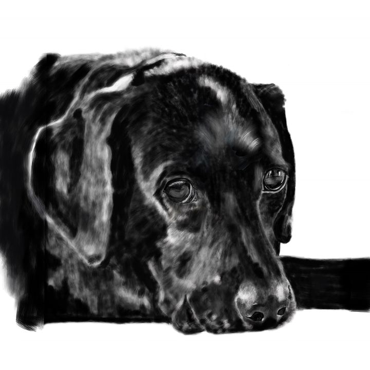 Black Labrador Retriever - Dogone Art