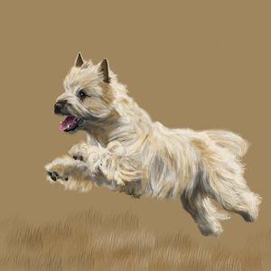 Cairn Terrier - Dogone Art