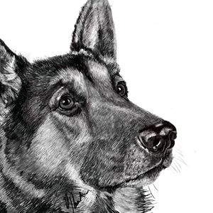 German Shepherd - Dogone Art