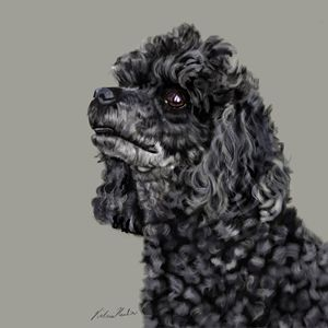 PoodleLooking Up - Dogone Art