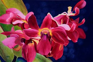 Tom's Orchid
