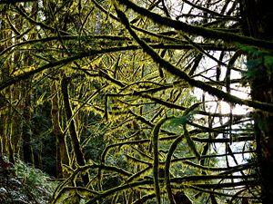 forest view - Kane Rushton