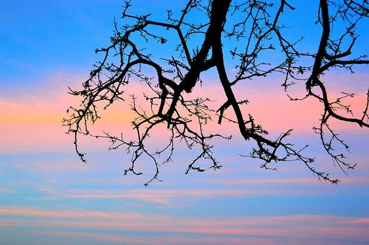 creepy tree - Kane Rushton