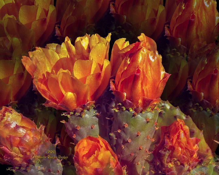 Cactus Flowers - Pamula Reeves-Barker Art