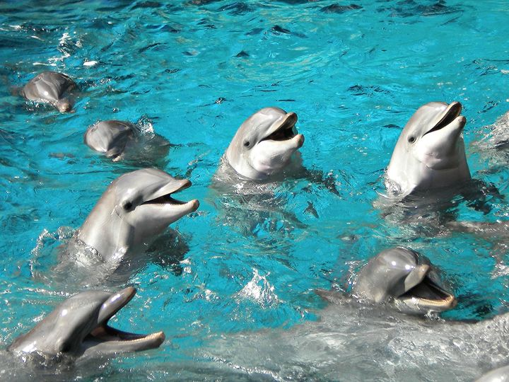 Happy Dolphins - Robin Kristopher Photography