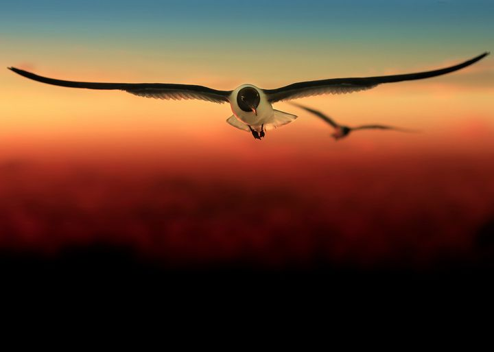 Soundless Flight - Kreativelens