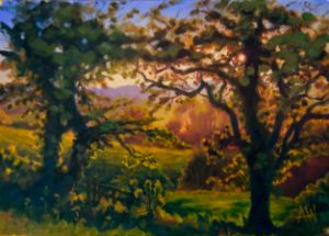 Backlit Trees, North Yorkshire - Antony Wootten
