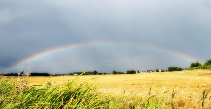 Rainbow - Rebecca J. Frank