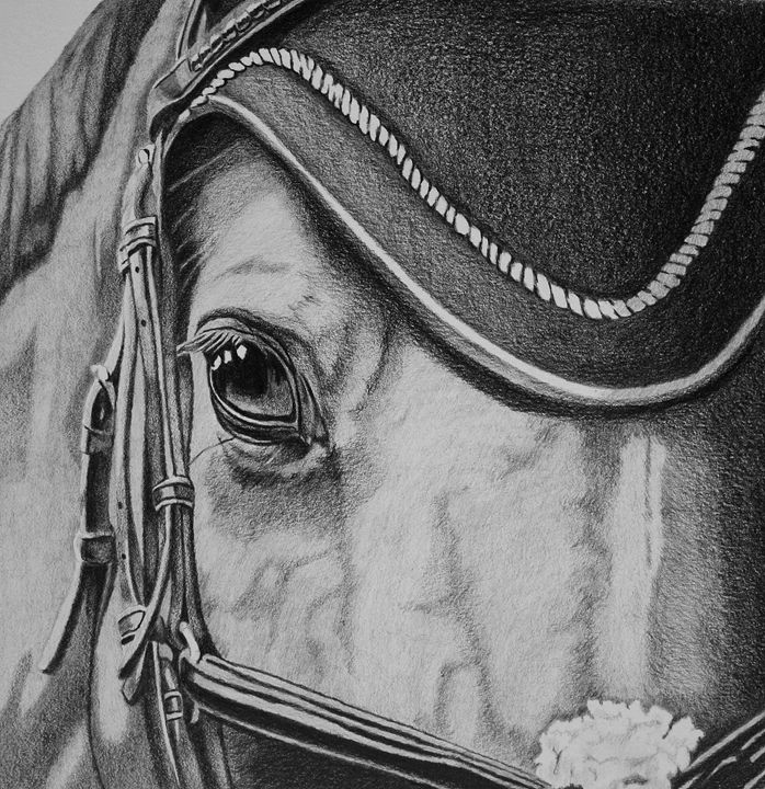 The Show Jumper - Elizabeth Llewellyn Art