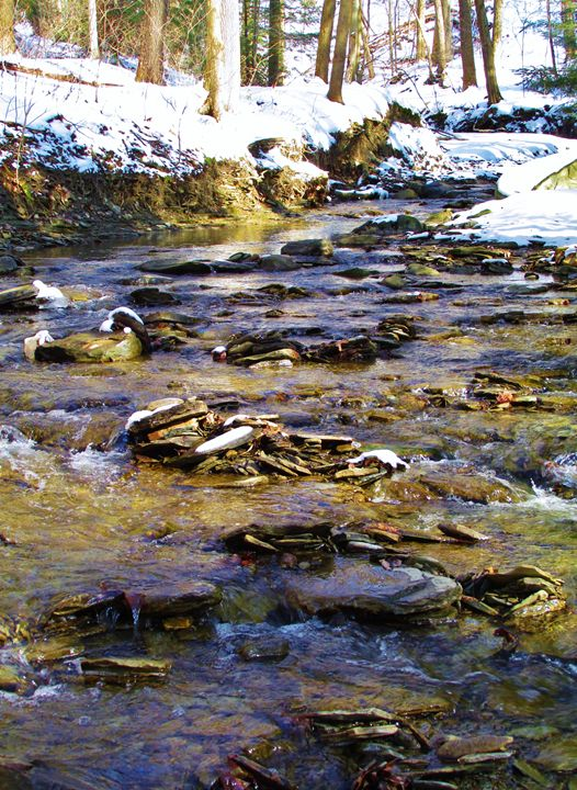 Winter Creek - Courtney Mills
