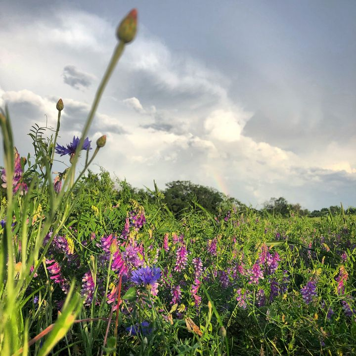 Rainbow Over Wildflowers - Corey Browne