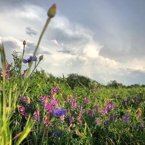 Rainbow Over Wildflowers