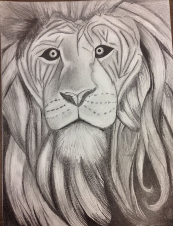 The Lion David Buckner Drawings Illustration Animals