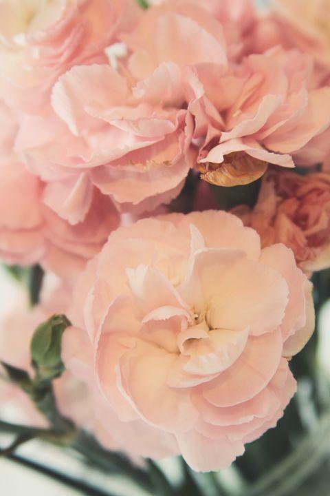Tea Roses - Vanilla Moon Studio