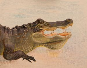 Alligator art