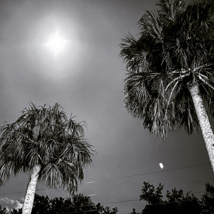 The Palms - Lithium Girl Photography