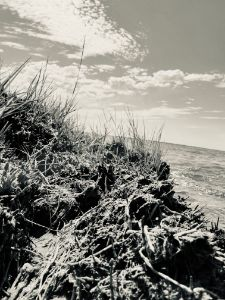 A View From The Dune