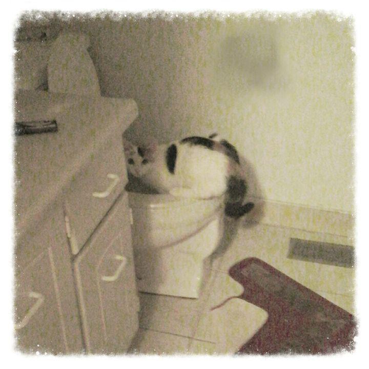 Toilet time! - Perfect Art