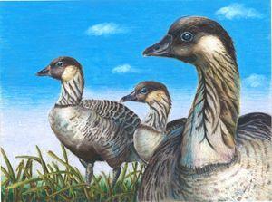 Ducks 2017 - Hawaiian Nene Geese - Gabby Heller