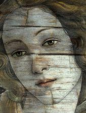 Venus Oak