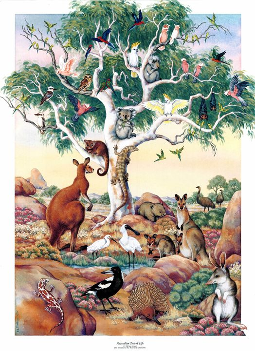 Australian Tree of Life - kateburnessart