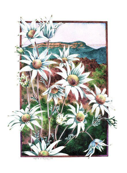 Flannel Flowers - kateburnessart