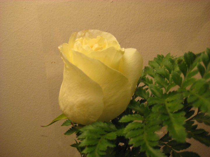 White Rose - Abish