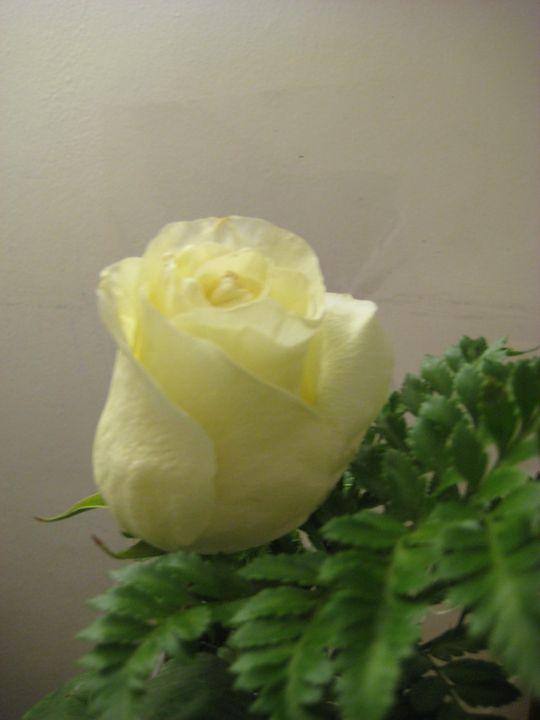 Rose! - Abish