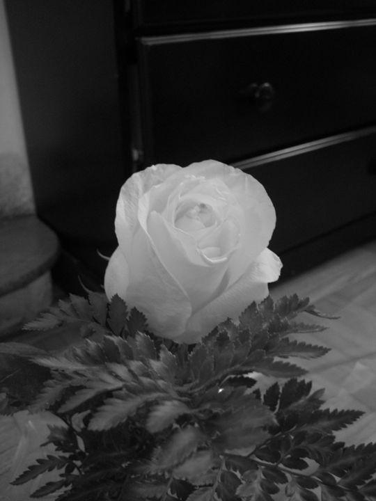 Black and White Rose - Abish