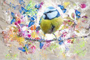 The lovely bird