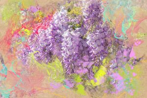 Wisteria purple rain