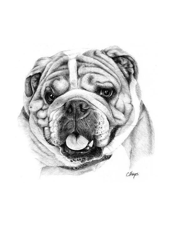 English Bulldog - Colin Hayes Art