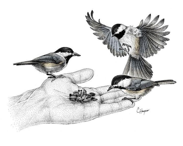 Chickadees on Hand - Colin Hayes Art