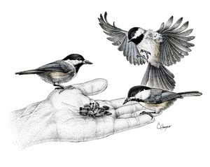 Chickadees on Hand
