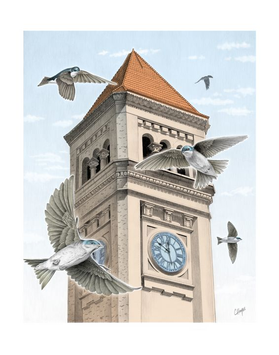 Clock Tower with Swallows - Colin Hayes Art