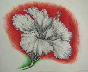 Hibiscus - Jessica D Perez
