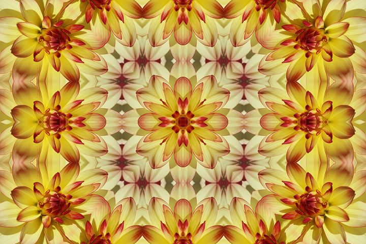 Designs on a Dahlia - Photography By Monnie
