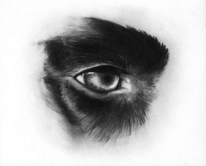 Dog eye pencil drawing - andre Illustration