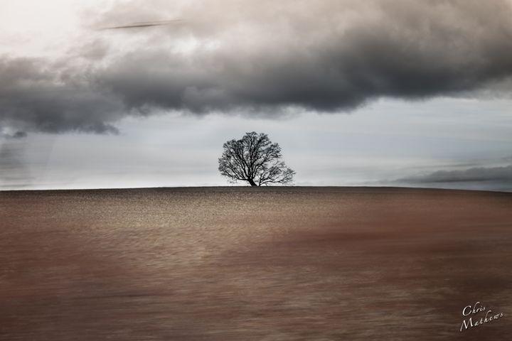 God's Tree - Chris Mathews | MCP Film.com