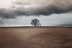 God's Tree