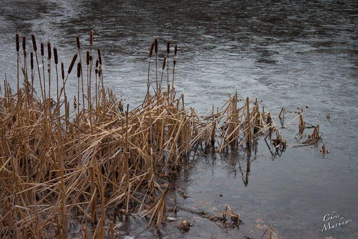 Iced Lake Cattails - Chris Mathews | MCP Film.com