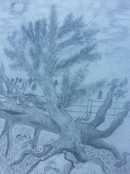 Pine tree - Crazy tree sketches