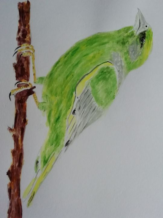 Greenfinch - Dave Taylor art works