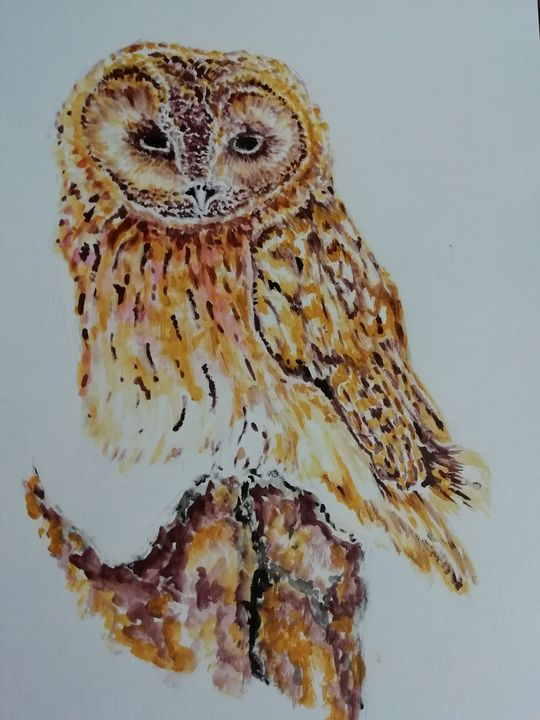 Tawny owl - Dave Taylor art works