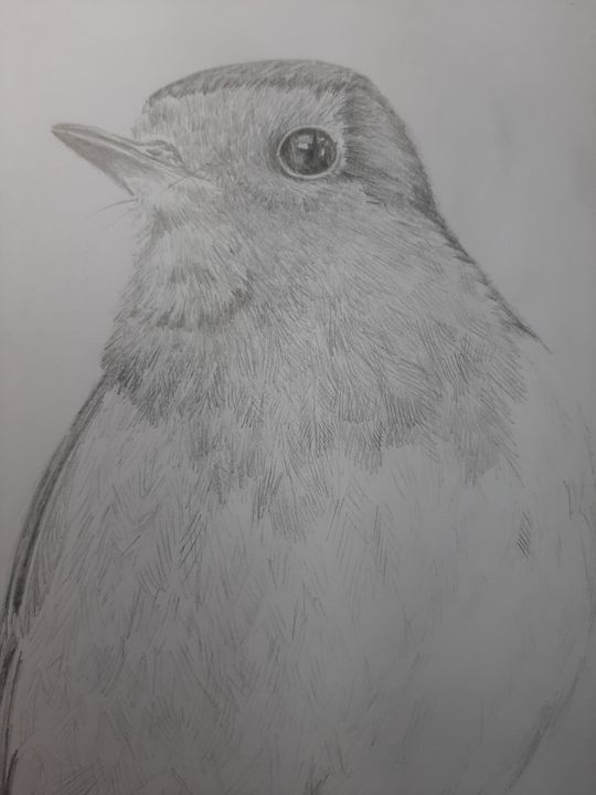 Robin - Dave Taylor art works