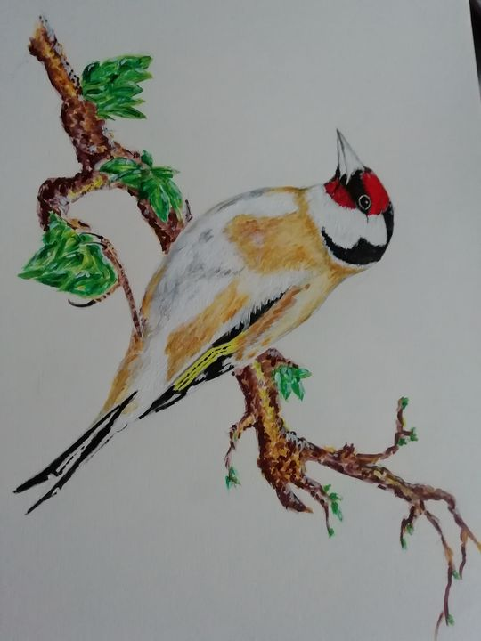 Goldfinch - Dave Taylor art works
