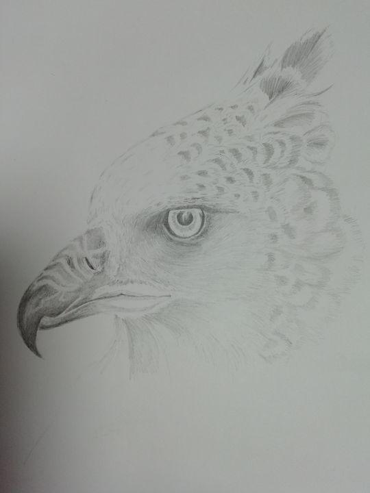 Crested eagle - Dave Taylor art works
