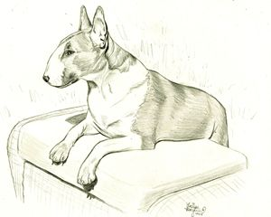 Rosie the Bull Terrier