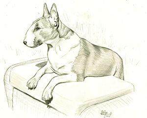 Rosie the Bull Terrier